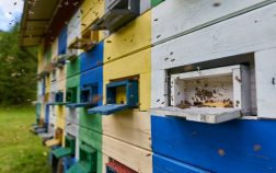 How Many Bee Hives to Make a Living