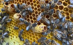 What Does A Honey Bee Hive Look Like