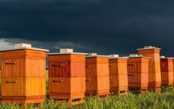 How Much Do Beehives Cost