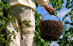 How To Lure Bees Into A Hive