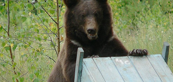 Protecting Beehives From Bears