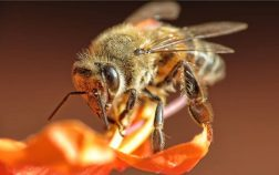 What Do African Bees Look Like
