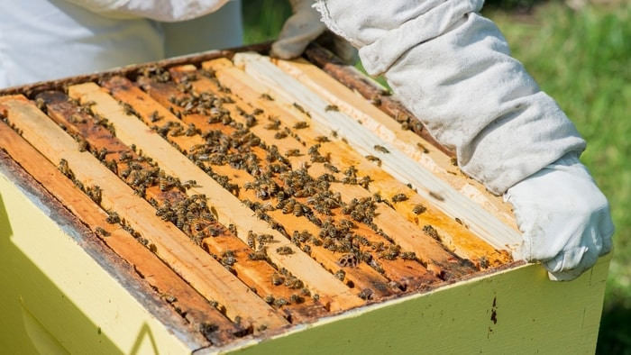 when to add supers to beehives