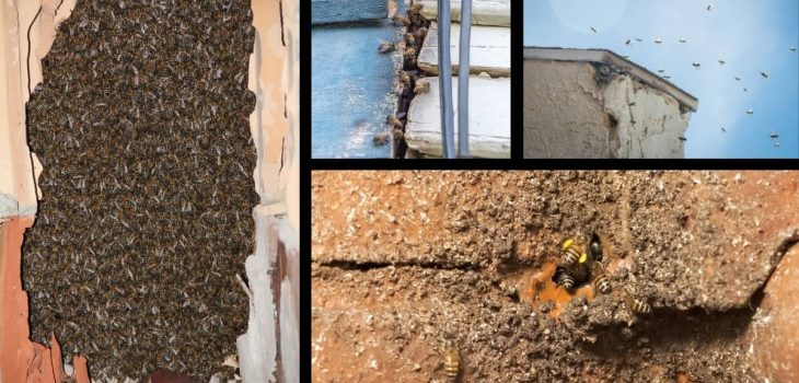Bees Nesting In House Walls