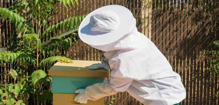 Bees and Your Neighbours and The Law