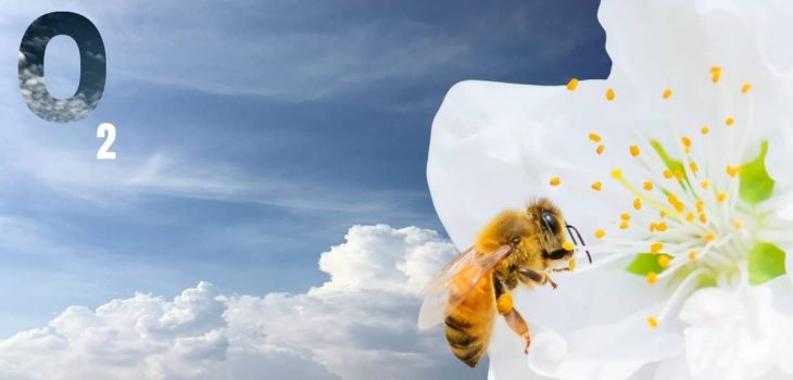 How Does A Bee Get Oxygen