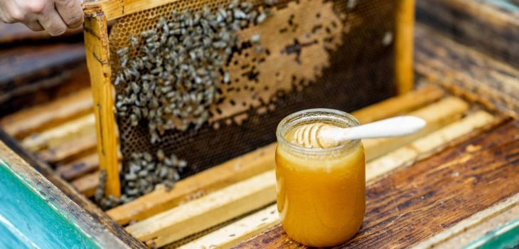 How Much Honey Can You Get From One Hive