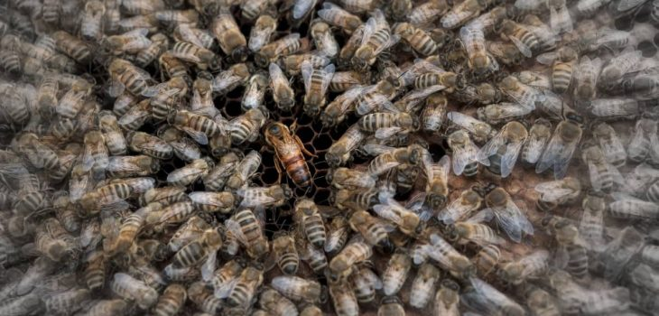 How To Find The Queen Bee In A Hive