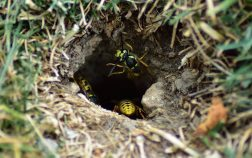 How To Get Rid Of Bee Nests In The Ground