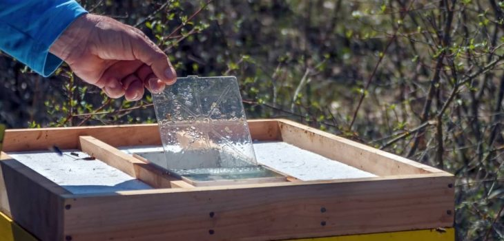 How To Make A Candy Board For Bees
