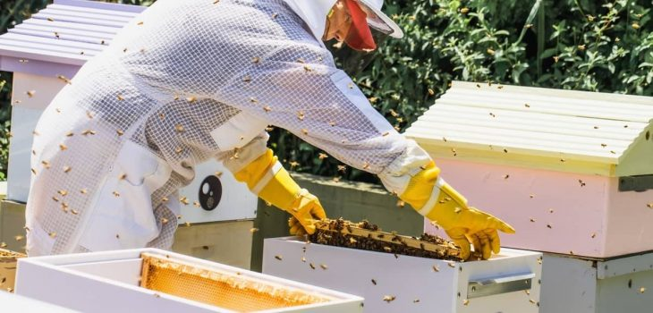 How To Split A Beehive Without A Queen