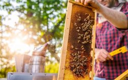 Why Don't Bees Sting Beekeepers