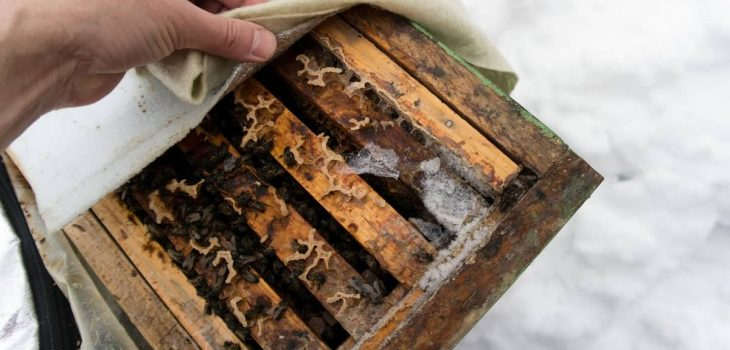 Do Bees Stay In Their Hives In The Winter