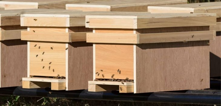 How Long Can Bees Stay In A Nuc