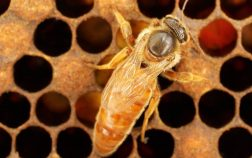 How Much Does A Queen Bee Cost