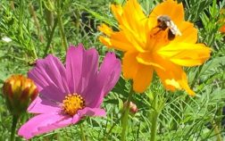 The Best Plants For Honey Production