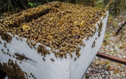 When To Add A Second Brood Box